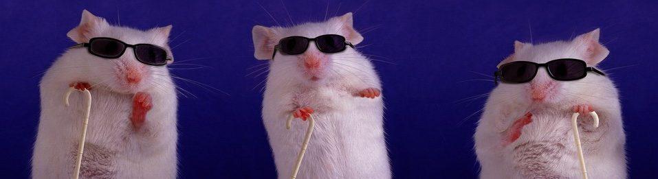 rats lab